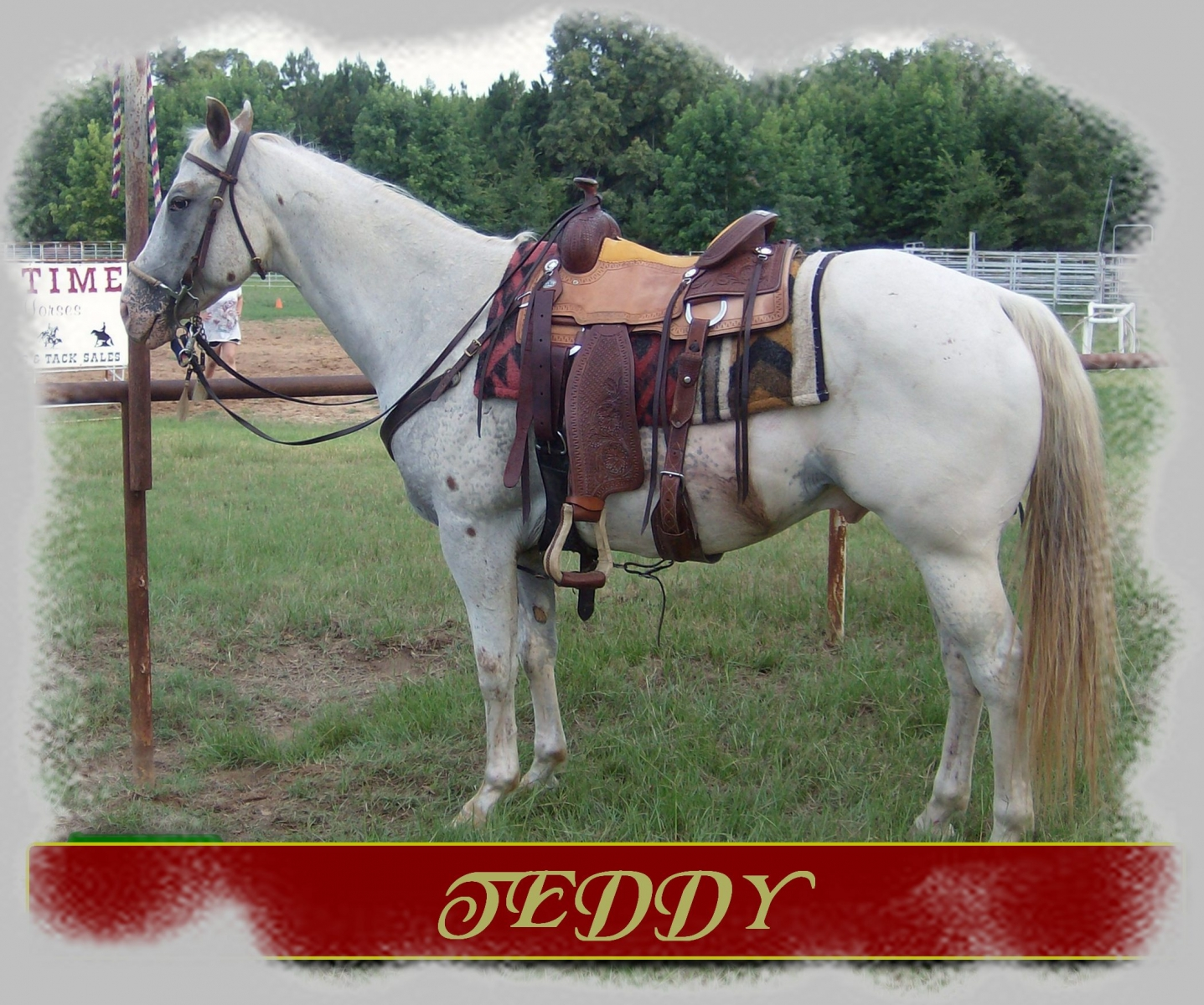 Teddy aka Hot Invitation ApHC  Appaloosa gelding
